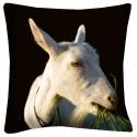Poduszka koza z woza
